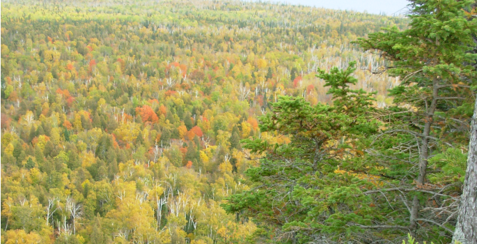 Wide angle trees